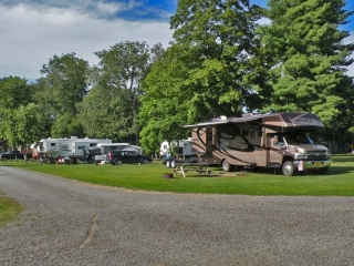 campers parked at campsite with trees